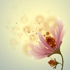 Flower romantic background Peony