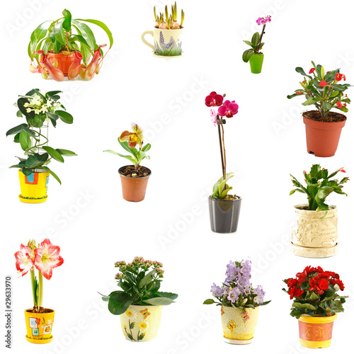 collage of indoor plants