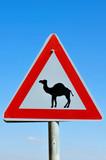 Road Sign - Beware Camel Crossing poster