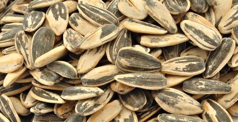 Fondo de semillas de girasol