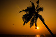 Sunset and coconut tree