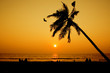 silhoutte of sunset with coconut tree