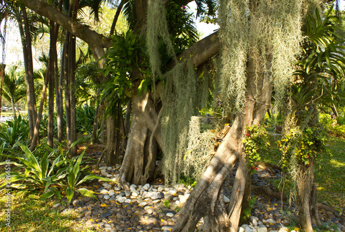 drzewo-banyan-i-orchidea