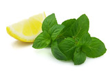 Mint with lemon slice
