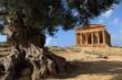 agrigento valle dei templi, sicilia, italia - 29675181
