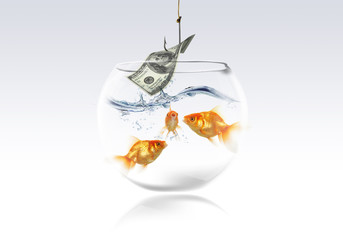 goldfish and money