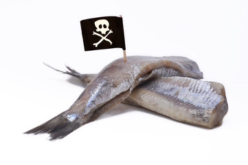 Piracy in fishery, in opposition to individual fishing quota