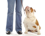 dog obedience training poster