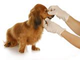 veterinary care poster