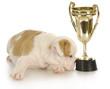 champion puppy