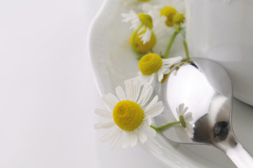 Detalle de una taza blanca con flores frescas de la manzanilla