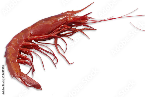 Single king prawn or shrimp
