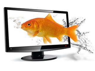 pesce televisore