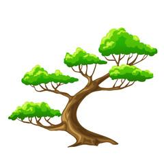 Cartoon vector tree bansai with white background