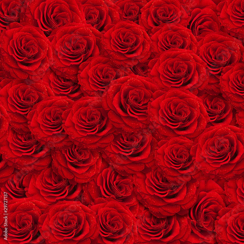 roses backgroud