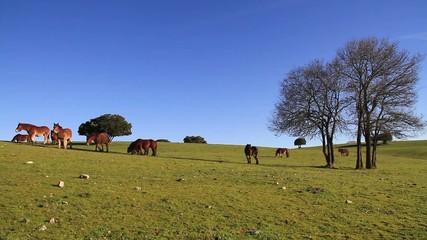 caballos buru 2a