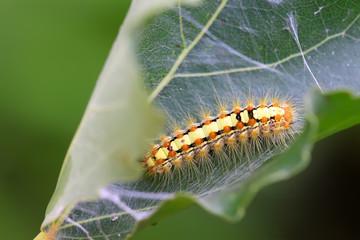 a caterpillar on the plant stem