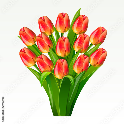 Bouquet from red tulips on on a white background