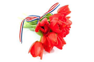 bouquet of red Dutch tulips with ribbon over white background