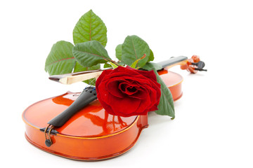 violin and red rose over white background