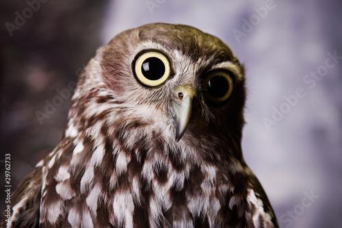 Aluminium Uil Wide Eyed Owl