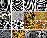 Collection of 16 vector skin animal texture