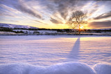Fototapety Tree in snow scene with dramatic sunset