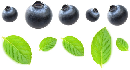 Blueberry with leaves of mint