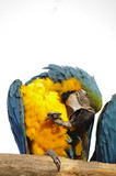 Macaw on perch