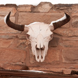 Bull skull with snow hanging on wall