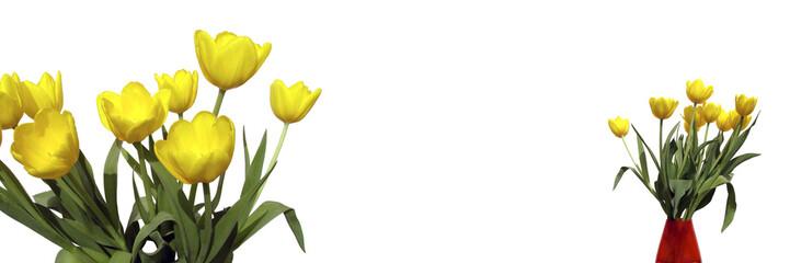 Bannière tulipes jaunes