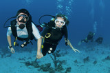 couple scuba dive together holding hands poster
