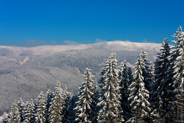 Winter mountain landscape with firs line