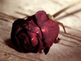 red rose over old rubbed wooden desk poster