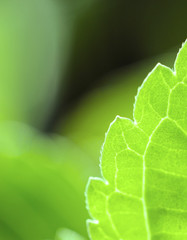 Leaf Closeup