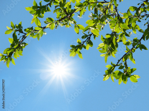 Sonne am Himmel - 29817907