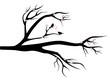 Birds in love on spring tree