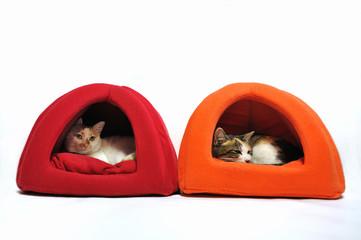 ネコの寝室