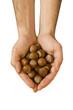Noisettes - épices et aliments