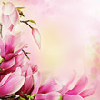 Spring magnolia flowers border