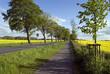 Leinwandbild Motiv Radweg durch Rapsfelder, Mecklenburg-Vorpommer, Deutschland