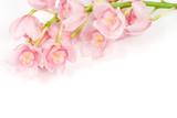 Fototapety 洋蘭の花