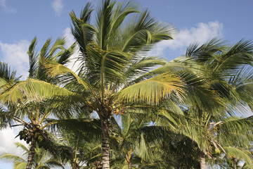Palm trees backround