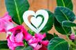 pink Gloxinie Zimmerpflanzen Blumentopf Herz