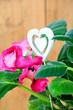Gloxinie Zimmerpflanzen Blumentopf Herz