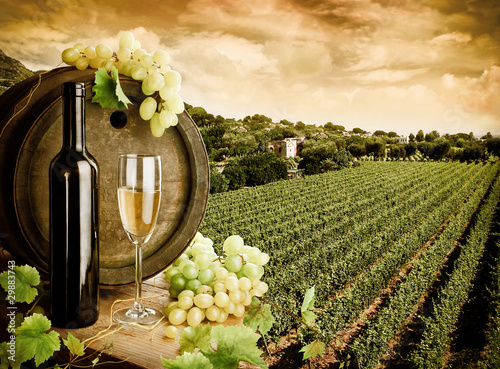 Wine and vineyard in vintage style