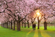 Herrliche Frühlingsszene bei Abendsonne