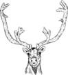 cariboo head