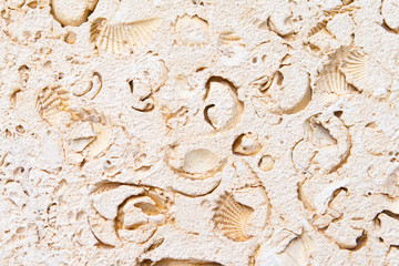 Full Frame Limestone with Embedded Fossils