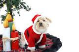Christmas Mutt poster